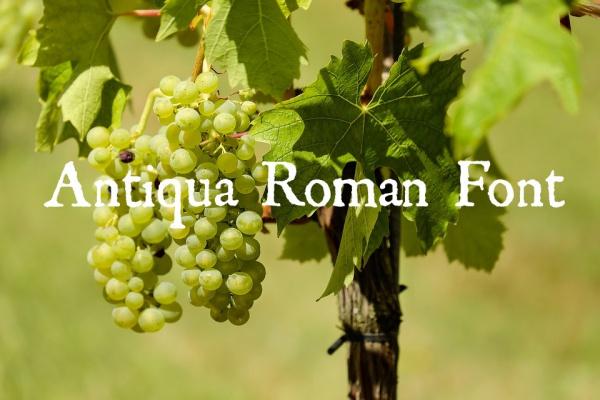 Antiqua Roman Font