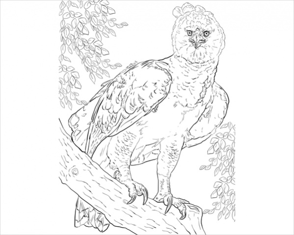 Bird Coloring Page for Adults