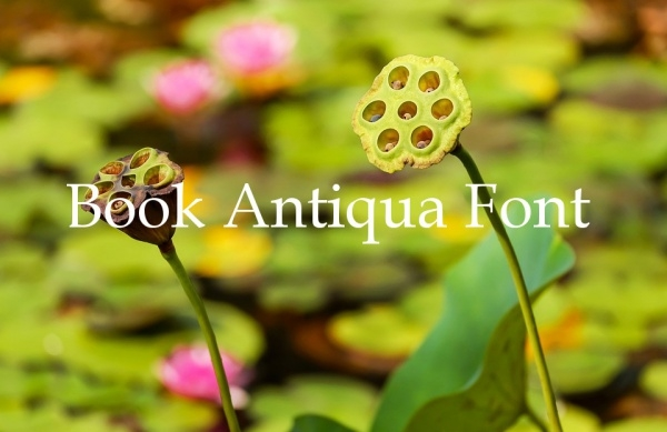 Book Antiqua Font