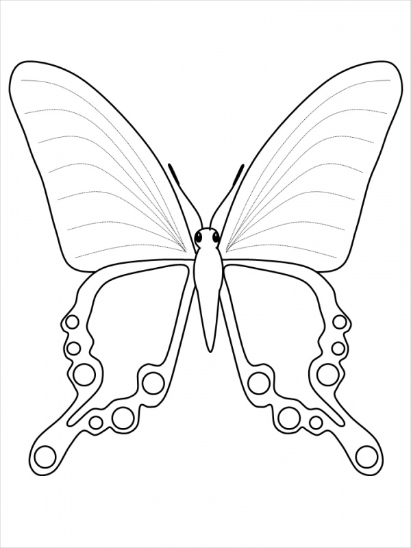 Butterfly Coloring Page for Kids