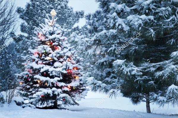 Christmas Snow Photo