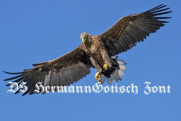 Free DS HermannGotisch Calligraphy Font