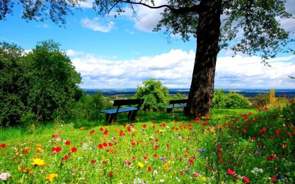 free-garden-spring-wallpaper