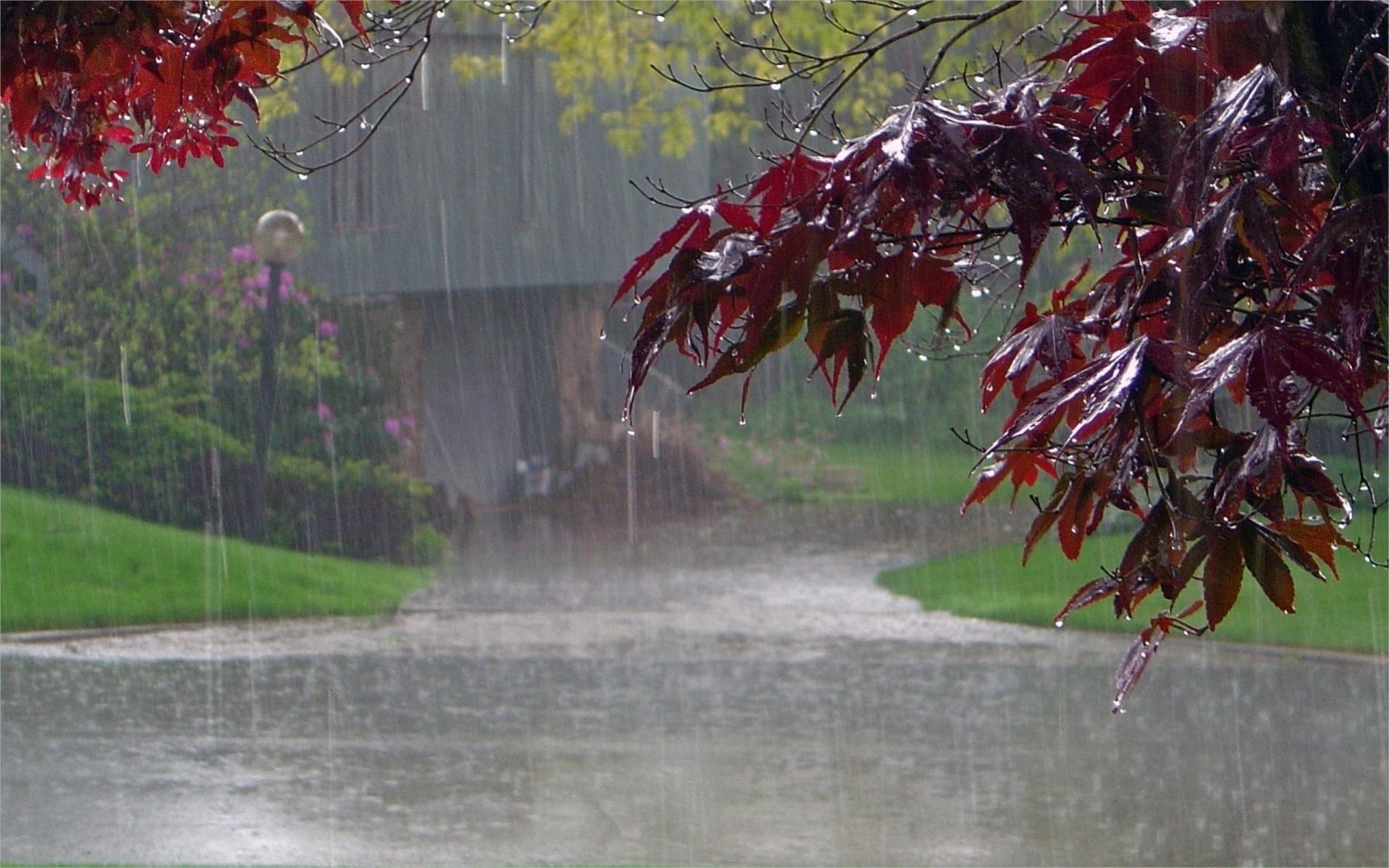 Free HD Rain Wallpaper