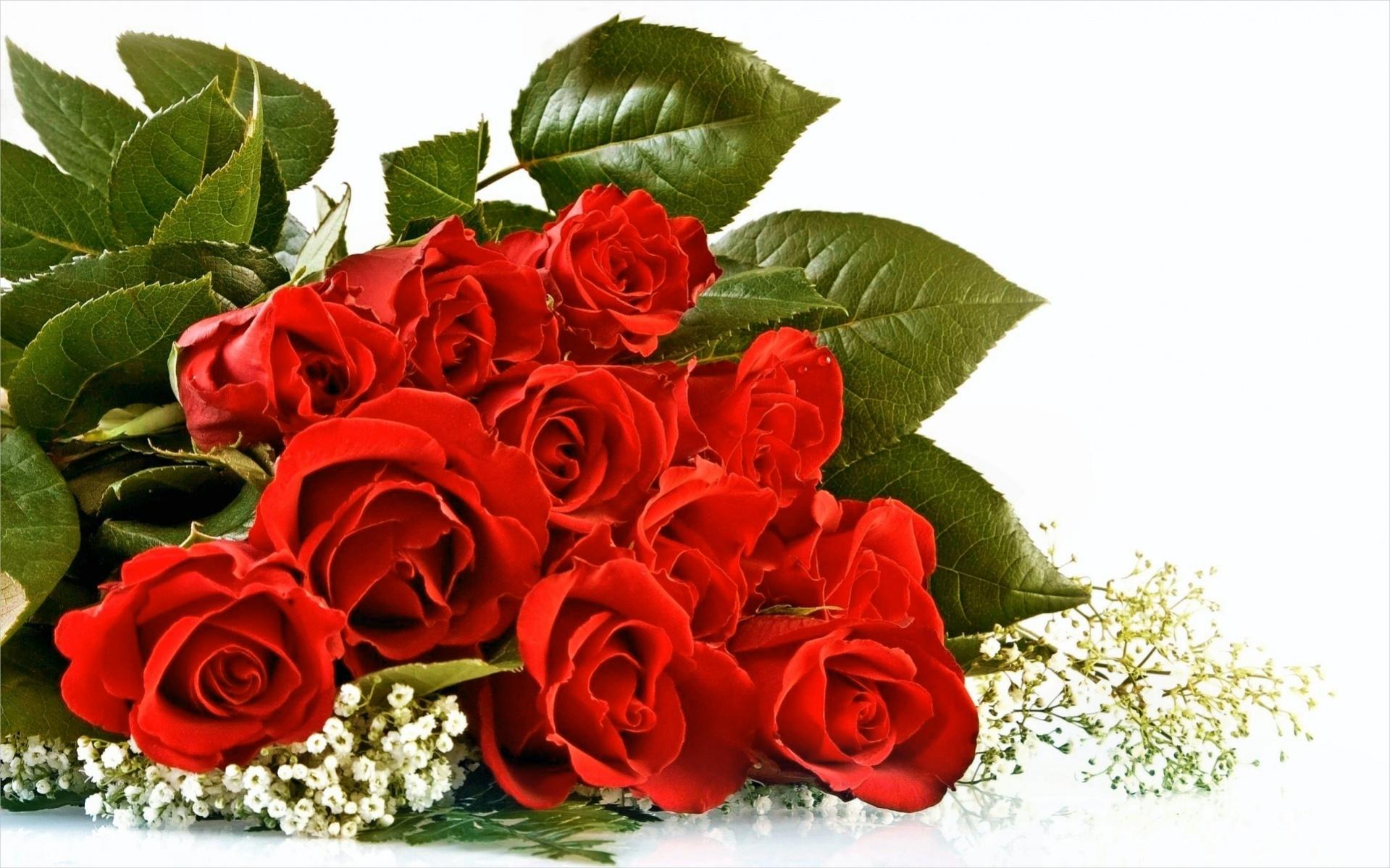 Free HD Rose Wallpaper