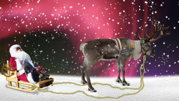 Free Printable Animal Christmas Card