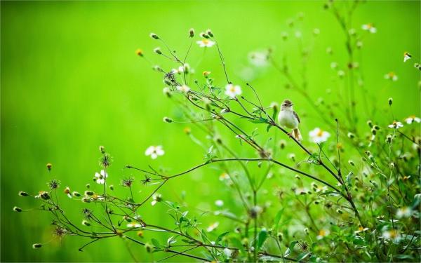 free-spring-bird-wallpaper