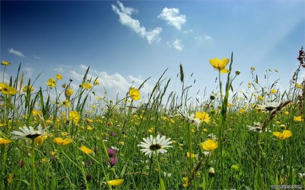 free-spring-desktop-wallpaper