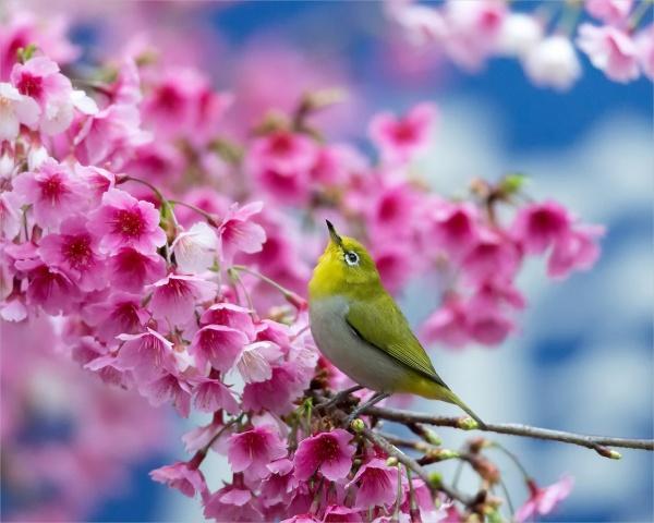 Free Spring HD Wallpaper