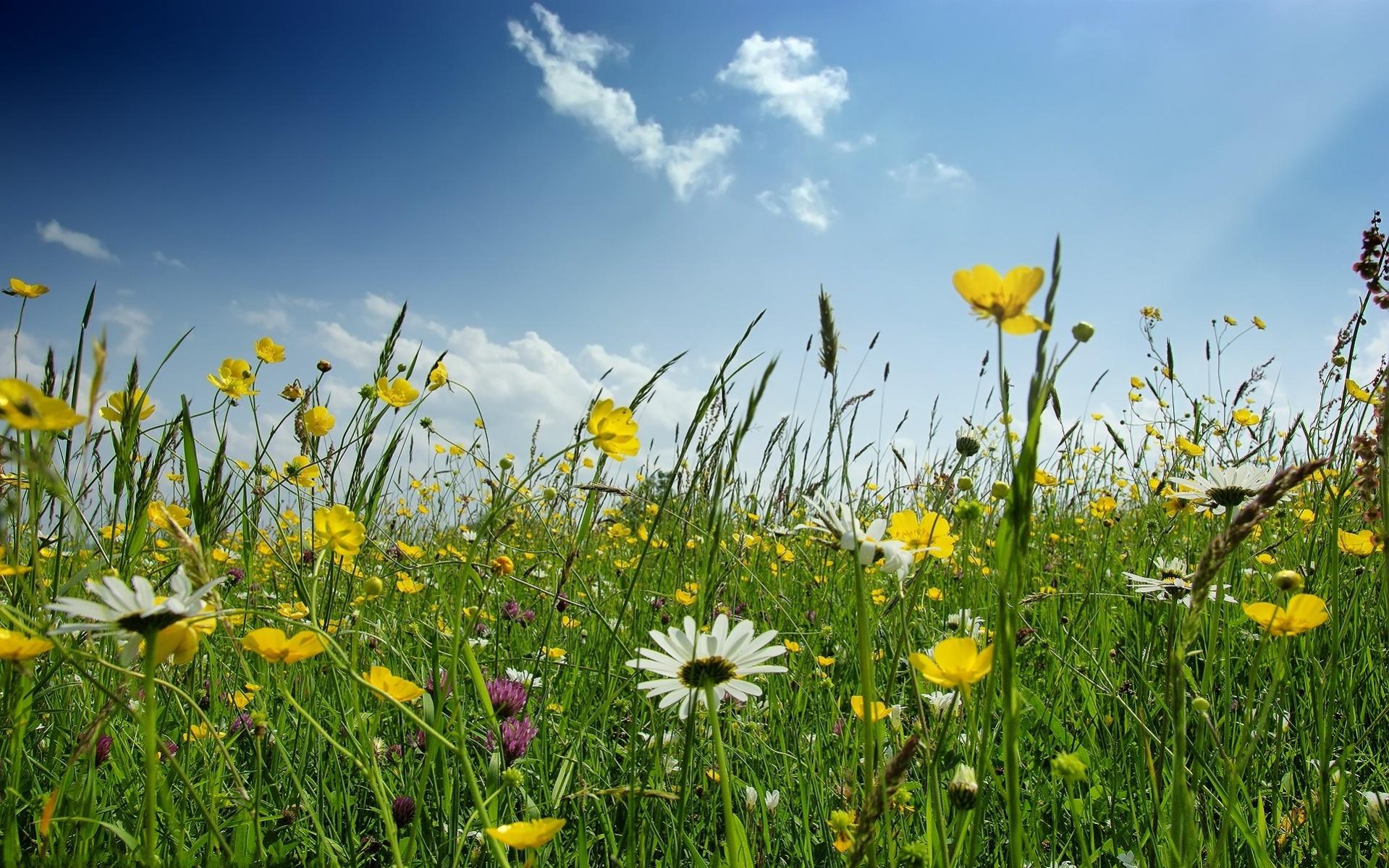 free-spring-landscape-wallpaper
