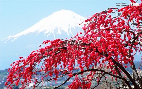 free-spring-mountain-wallpaper