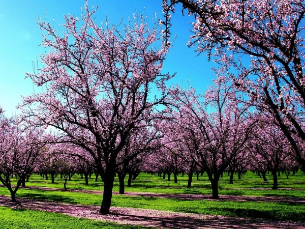 free-spring-nature-wallpaper