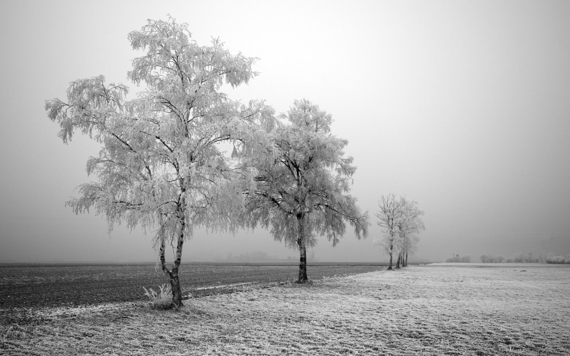 Free Winter Black and White Wallpaper