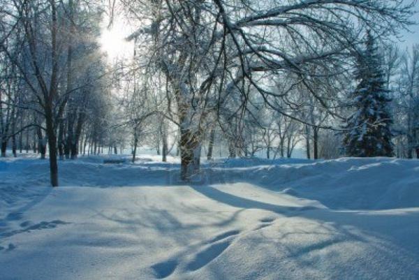 Free Winter Nature Wallpaper
