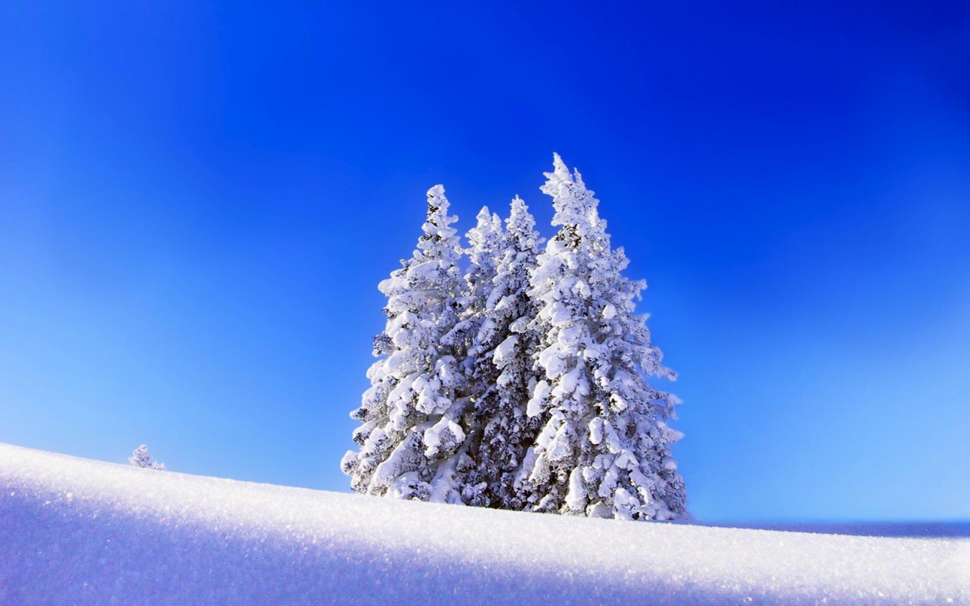 Free Winter Wallpaper