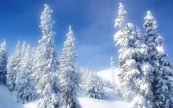 Free Winter Wonderland Wallpaper