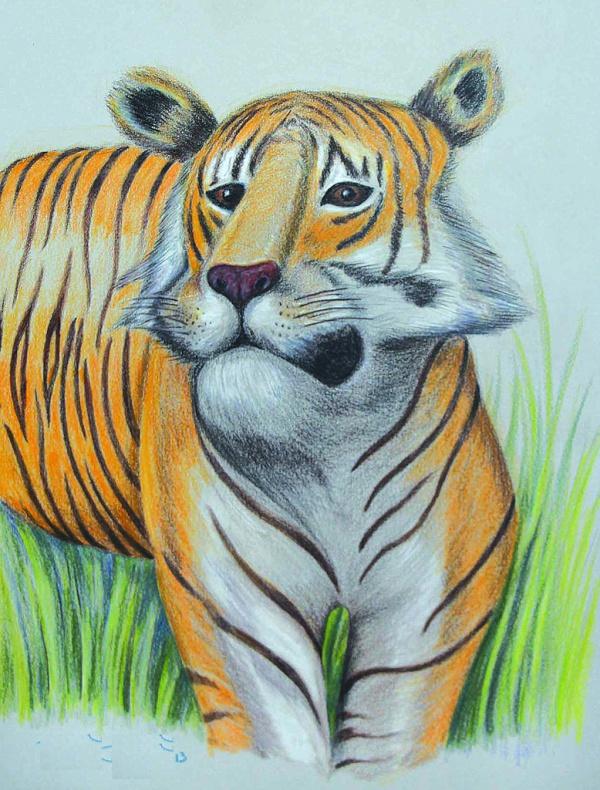Pretty Animal Drawing