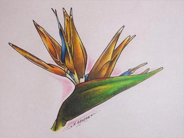 Tropical Flower Drawings