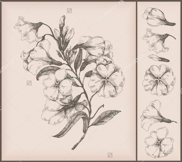 Vintage Flower Drawings