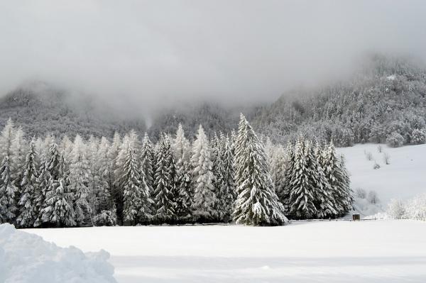 Free Winter Image Wallpaper