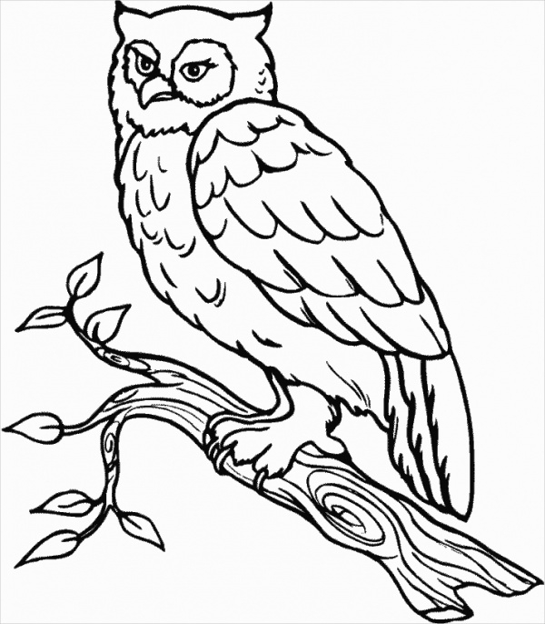 Free 18 Owl Coloring Pages In Ai