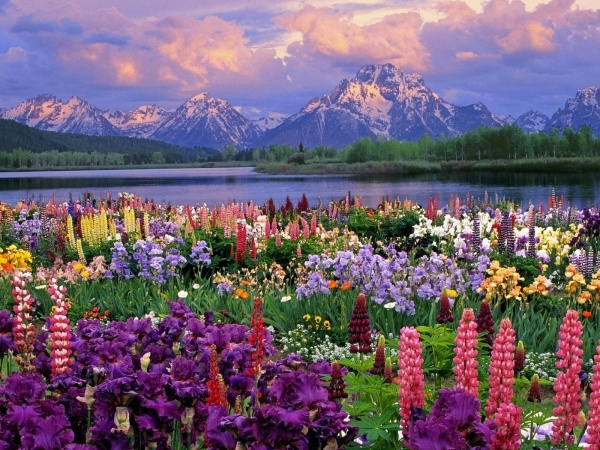 Amazing Flower Desktop Background