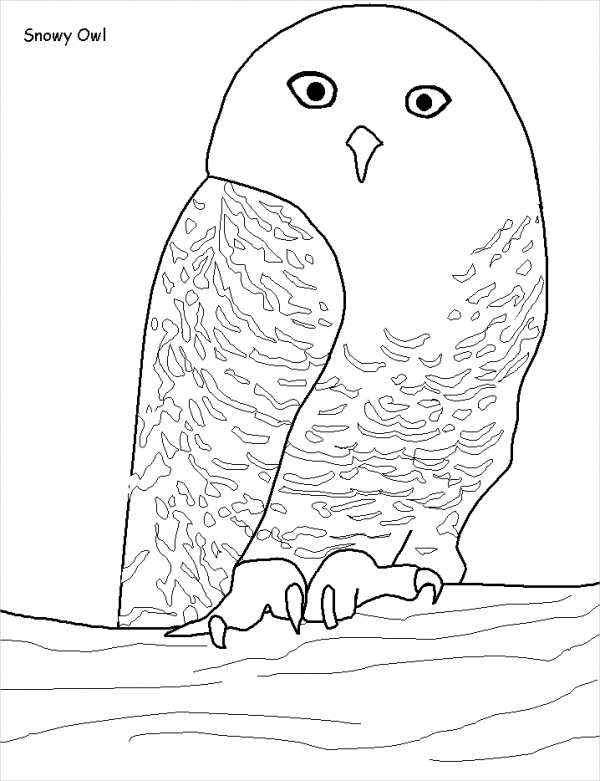 18+ Owl Coloring Pages - JPG, AI Illustrator Download