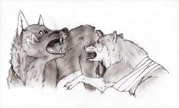 Black And White Wolves Drawing