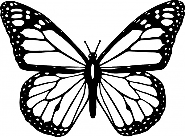 Butterfly Clipart Black And White
