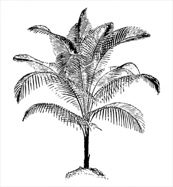 coconut palm tree clipart