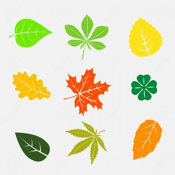 Colorful Autumn Leaves Shapes