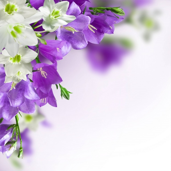 Colorful High Resolution Flower Background