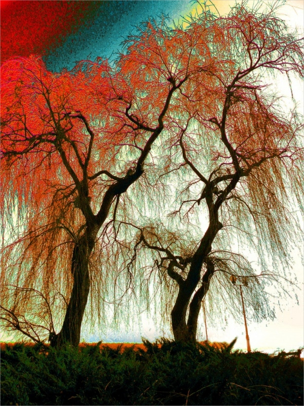 Colorful Tree Drawing