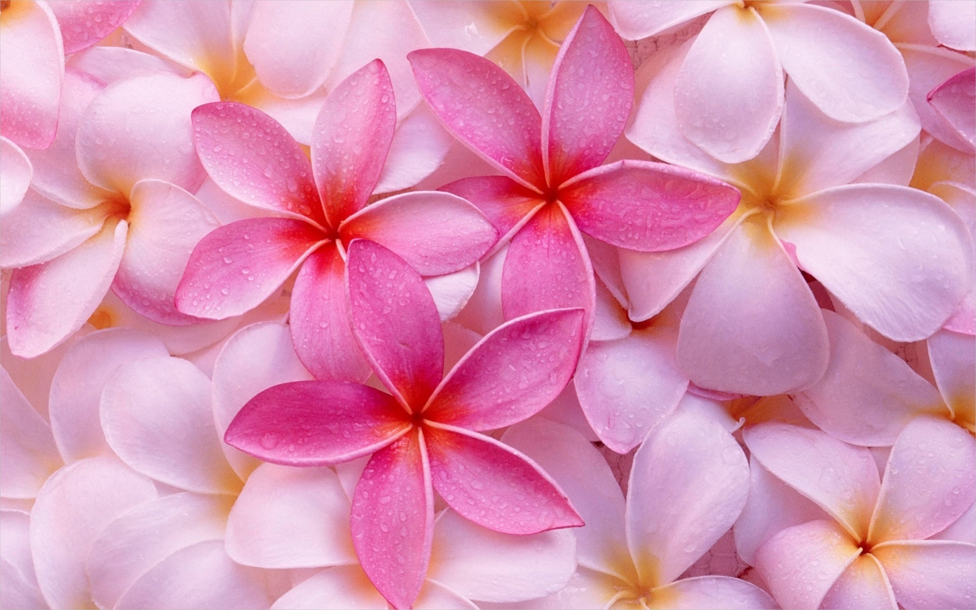 Colorful Tropical Flower Backgrounds