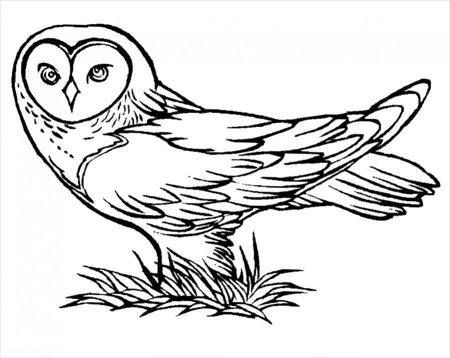 Download Owl Coloring page