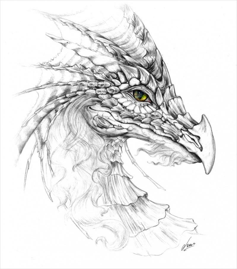 Elegant Dragon Drawing