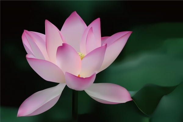 Fabalous Lotus Flower Background