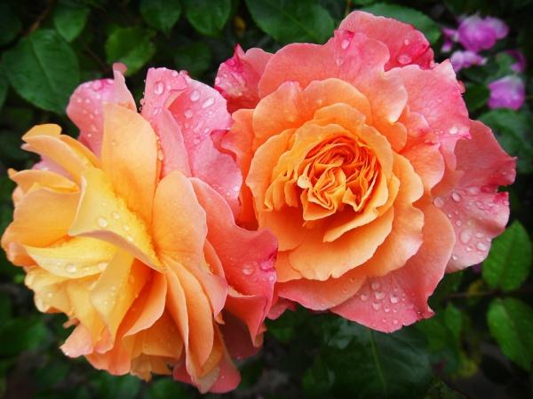Free Beautiful Flower Photo