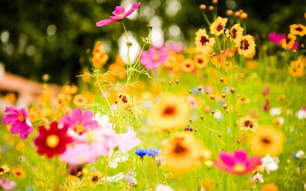 Free Flower Background Design