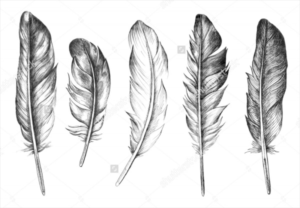 Hand Drawn Feathers Drawing