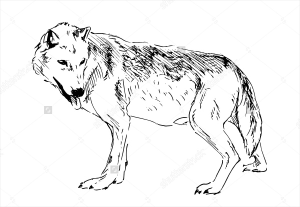 Hand drawing wolf
