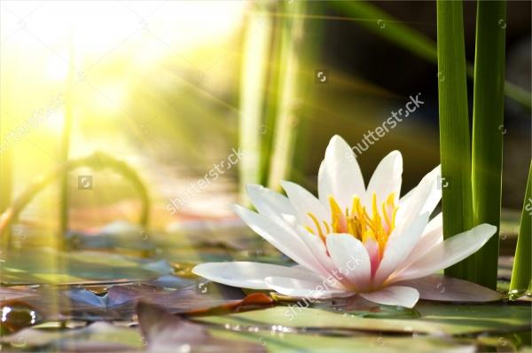 Lotus Flower Background Design