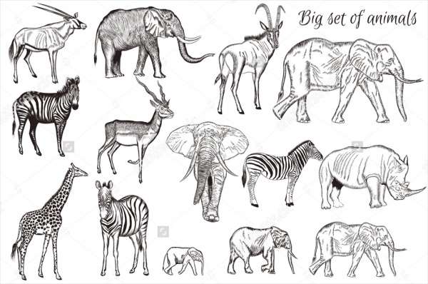 Mega Collection of Animal drawings