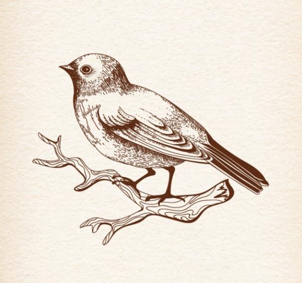 Natural Bird Drawing