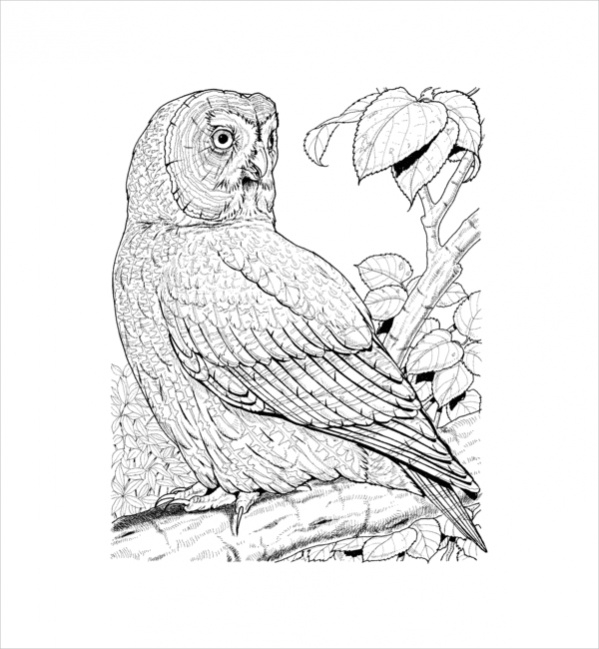 Owl Coloring Page for Adults