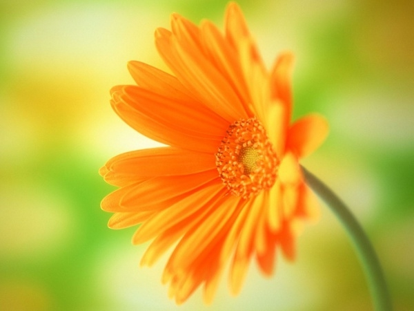 Simple High Resolution Flower Background