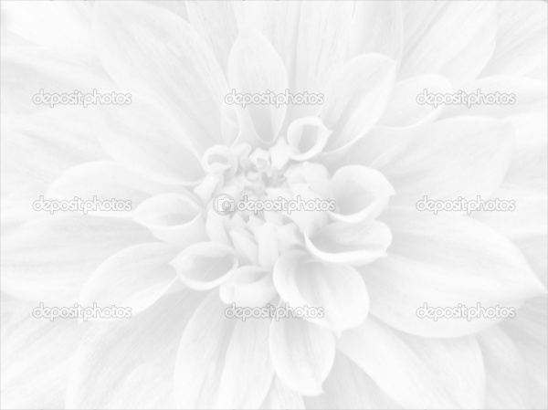 Simple White Flower Background