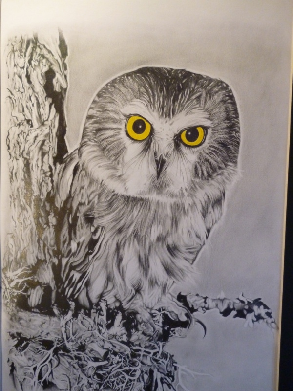Terrific Owl Drawing