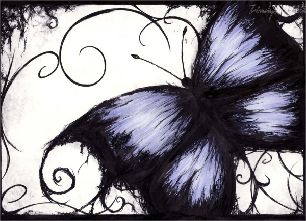 The Blue Butterfly Pencil Drawing