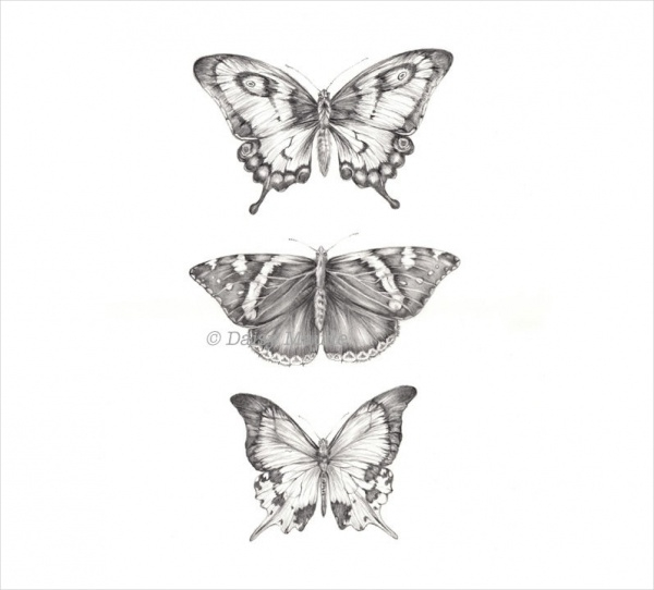 Three butterflies pencil drawing